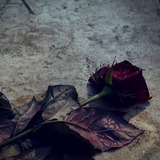Rose on a Grave by JoX1989